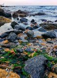 Coast and many things. Stones, shells and other things on the coast Royalty Free Stock Photos