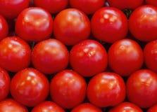 Many tomatoes. Stock Photos