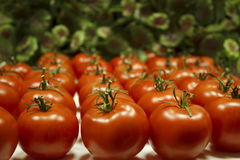 Many tomatoes lie in rows. Many ripe red tomatoes with green peduncles lie in rows on a white table Stock Photo