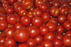 Many tomatoes Stock Photo