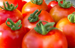 Many tomatoes side by side. Royalty Free Stock Images