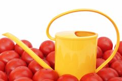 Many tomatoes and watering can Stock Photos