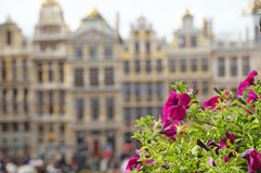 Grand Place in Brussels. Many tourists walk and look at beautiful buildings on the main square in Brussels. Flowers bloom on the Grand Place in Brussels stock images