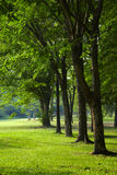 Many tree in park Stock Image