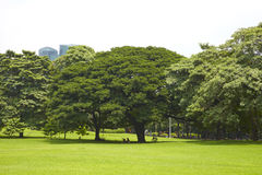 Many tree in park Stock Images
