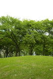 Many tree and small hill Stock Images
