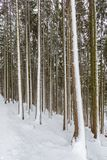 Many tree trunks in forest winter with snow. Many natural tree trunks in forest winter with snow Stock Image