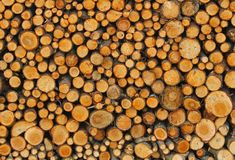 Many tree trunks in the Woodshed of lumberjack who is getting re Stock Image