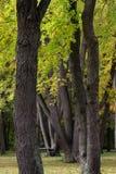 Many trees Royalty Free Stock Image