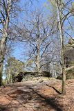 Many trees at the green hiking trail in spring at Elbe Sandstone Mountains in beautiful Saxon Switzerland near Bohemian Switzerlan. Many trees and big grey rocks stock images