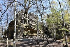 Many trees at the green hiking trail in spring at Elbe Sandstone Mountains in beautiful Saxon Switzerland near Bohemian Switzerlan. Many trees and big grey rocks royalty free stock images