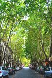 Green Tunnel. Many trees and cars on the streets of Colonia de Sacramento, Uruguay Royalty Free Stock Photo