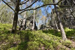 Many trees at the green hiking trail in spring at Elbe Sandstone Mountains in beautiful Saxon Switzerland near Bohemian Switzerlan. Many trees and rocks at the royalty free stock photography