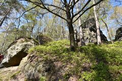 Many trees at the green hiking trail in spring at Elbe Sandstone Mountains in beautiful Saxon Switzerland near Bohemian Switzerlan. Many trees and rocks at the stock photography
