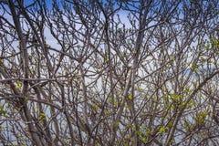 Many Trees Near The See Stock Image