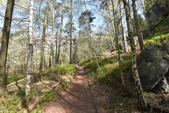 Many trees at the green hiking trail in spring at Elbe Sandstone Mountains in beautiful Saxon Switzerland near Bohemian Switzerlan. Many trees and rocks at the royalty free stock photo
