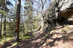 Many trees at the green hiking trail in spring at Elbe Sandstone Mountains in beautiful Saxon Switzerland near Bohemian Switzerlan. Many trees and rocks at the royalty free stock photos