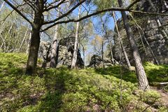 Many trees at the green hiking trail in spring at Elbe Sandstone Mountains in beautiful Saxon Switzerland near Bohemian Switzerlan. Many trees and rocks at the stock photo