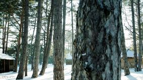 Many trees in the snow, winter forest, sun`s rays shine through trees in the backlight, lot of snow lying on the ground. Frost and sun, steadicam moves past stock video