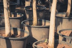 Many trees in tree nursery garden Royalty Free Stock Images