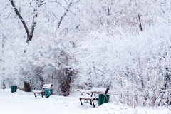 Many trees under snow. Along way with benches Royalty Free Stock Photography