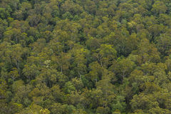 Many treetops of eucalypt trees from a forest in the Blue Mounta Stock Images