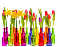 Many tulip and narcissus flowers in colorful vases Royalty Free Stock Photography