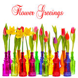 Many tulip and narcissus flowers in colorful vases Stock Photo