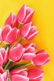 Many tulips Royalty Free Stock Photography