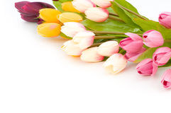 Many tulips isolated Stock Images