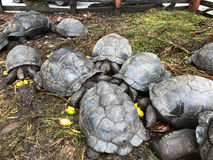 Many turtles Stock Images