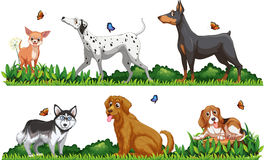 Many type of dogs in the park Royalty Free Stock Photo