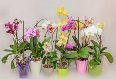 Many types of colored orchid  branch flowers, flowerpots and vase Stock Photos