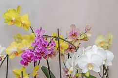 Many types of colored orchid  branch flowers, isolated Stock Image