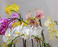 Many types of colored orchid  branch flowers, isolated Royalty Free Stock Image