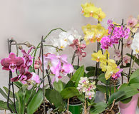 Many types of colored orchid  branch flowers, isolated Stock Photo