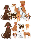 Many types of dogs Stock Images