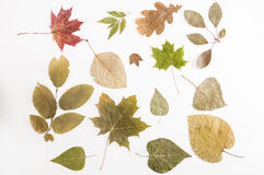Many types of dried leaves. Stock Photo