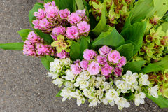 Many types of flowers for sale along the way. Many types of flowers pink, white and green for sale along the way Royalty Free Stock Image