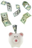 Many USD dollar banknote money flying in to or out of pink piggy. Bank, saving pig isolated on white Stock Photos