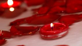 Valentine`s day roses floating on water. Many Valentine`s day rose petals floating on water with candles stock footage