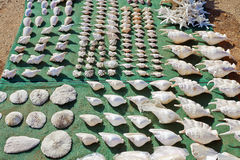 Many varied sea shells for sale Stock Photography