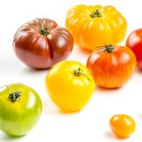 Many varieties of colorful tomatos Stock Photos