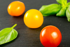 Many varieties of colorful tomatos Royalty Free Stock Photography