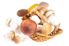 Many various mushrooms Stock Images