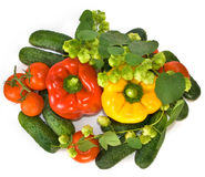 Many vegetables Stock Image