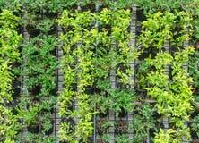 Many vertical farm green stock photos