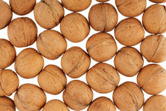 Many walnuts Stock Image