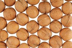 Many walnuts Stock Image