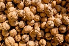 Many walnuts close-up Royalty Free Stock Photography